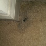Carpet Cleaning Coral Springs FL image1