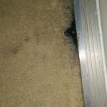 Carpet Cleaning Coral Springs FL image2