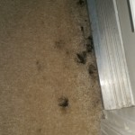 Carpet Cleaning Coral Springs FL image3